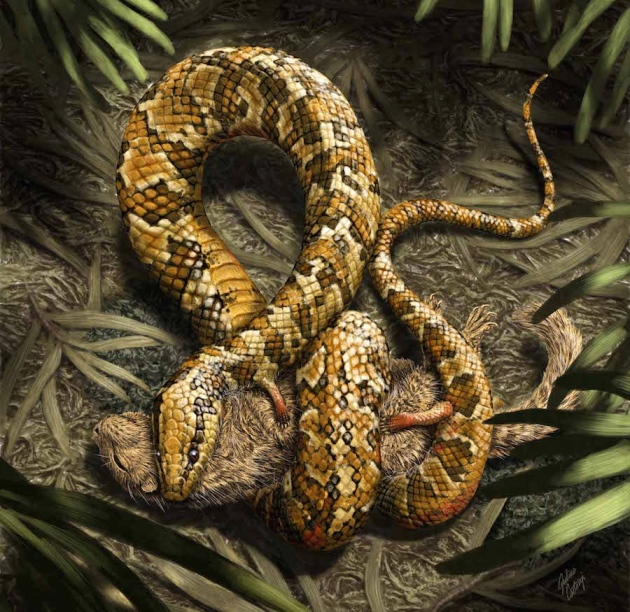 An artist's impression of Tetrapodophis putting its legs to work subduing its prey. credit: Julius T. Cstonyi